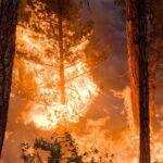 فرنسا : الحرائق تأتي على 480 هكتارا من الغابات
