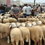 أسعار أضاحي العيد بنقاط البيع المنظمة