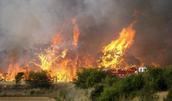 الجزائر : 3 قتلى في حريق بغابات سكيكدة