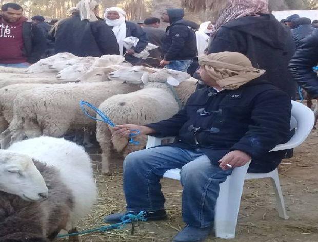 صورة اليوم : إبراهيم الڤصّاص يستبدل البشر بالأغنام في سوق دوز!
