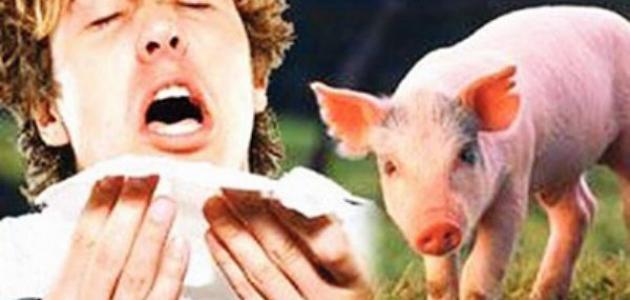 الجزائر : السلطات تنفي وجود اصابات بانفلونزا الخنازير