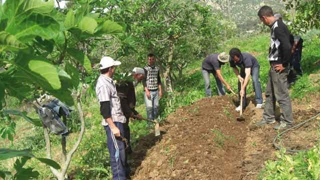 وزير الفلاحة:برنامج استغلال الأراضي الدوليّة سيُوفّر 3500 موطن شغل