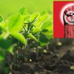 تونسي يفوز بجائزة دولية في الابتكار الزراعي