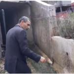 فيديو: فيصل التبيني يُطارد ثعبانا !!