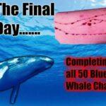 """وكالة الانترنات: لسنا معنيّين بحجب لعبة """"الحوت الأزرق"""""""