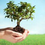 حملة لغراسة 1000 شجرة بولاية أريانة