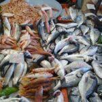وزارة الفلاحة: 64.5% نسبة ارتفاع صادرات منتوجات الصيد البحري
