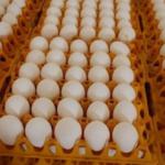 وزير التجارة : سنُوفّر 47 مليون بيضة خلال رمضان