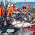 المغرب والاتحاد الأوروبي : مفاوضات جديدة حول الصيد البحري