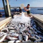 وزارة الفلاحة: إرتفاع في صادرات الصيد البحري بـ 44.23 %