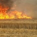 باجة : حريق يلتهم 40 هكتارا من الحبوب