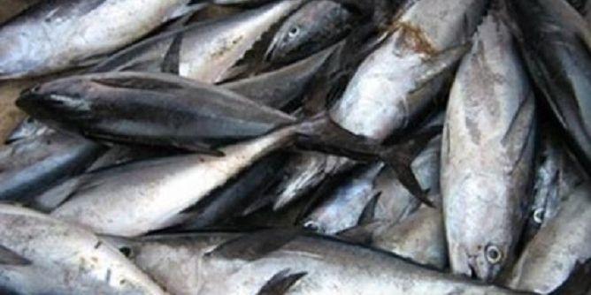 صفاقس: حجز 90 كلغ من الأسماك الفاسدة