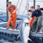 اتحاد الفلاحة يدعو إلى الإبتعاد عن مناطق صيد التنّ الأحمر