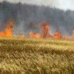 نابل: حريق يأتي على 6 هكتارات من الحبوب