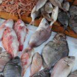 وزارة الفلاحة: تطوّر صادرات الصيد البحري بـ 36.32%