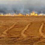 جندوبة: حريق يأتي على 5 هكتارات من القمح