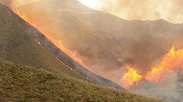 """الكاف: شبهة إرهابية وراء حريق بجبل """"بوعديلة"""""""