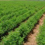 """وصف بالبرنامج الرائد : """"درون"""" لإدارة المشاريع الزراعية بسيدي بوزيد"""