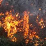 3 أيام بعد اندلاعه :السيطرة على حريق جبل بوعديلة بالكاف