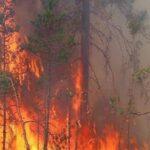 باجة: حريق يأتي على 11 هكتارا