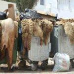 """وزير الصناعة يُطلق حملة """" جلد العيد.... في عوض ترميه يُولّي ثروة """""""