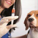 توصيات من وزارة الصحة للوقاية من داء الكلب