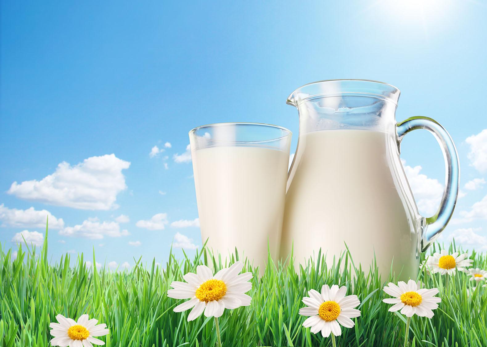 وزارة التجارة: توريد 350 ألف لتر من الحليب أسبوعيا