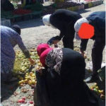 """""""البرباشة"""" يمثلّون 5% من الشعب التونسي/ بقلم حمزة حسناوي"""