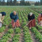 تونس تحتفل باليوم العالمي للمرأة الريفية