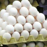 منظّمة الدّفاع عن المُستهلك تُطالب بالتخفيض في سعر البيض