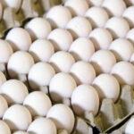 في بنزرت والمنستير: حجز 41200 بيضة