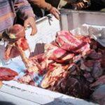 زغوان:حجز 240 كلغ من لحم بقري مُصاب بداء السل