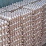 بن عروس: حجز 60 ألف بيضة مخزنة بطريقة غير قانونية