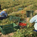 المؤشّر العالمي للأمن الغذائي: تونس الثانية إفريقيّا والسابعة عربيّا