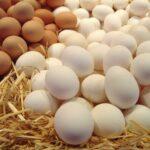نعسان: حجز 9000 بيضة و150 لترا من الزّيت المُدعّم
