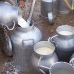 عبد المجيد الزار : توريد الحليب ضربة لاقتصاد البلاد