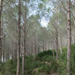 قرّرت مقاضاة مدير إدارة الغابات: نقابة الحرس تتّهم عمّال غابات بعدم التعاون