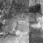 مُؤرخان يكشفان هول الكارثة : لبنانيون أكلوا لحوم أولادهم في الحرب العالمية الأولى!