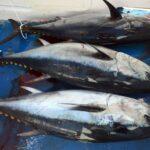 العاصمة: حجز 3 أطنان من أسماك التنّ الفاسد (فيديو)