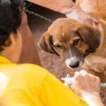 محكمة أريانة: تقرير الطبّ الشرعي أثبت هلاك طفل بداء الكلب