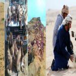 خلفيات صيد الحبارة والغزلان : قافلة قطريّة بـ38 سيارة في قبلي لمباشرة أعمال إبادة