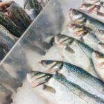 صفاقس: حجز 3 أطنان من الأسماك المُجمّدة وإيقاف صاحب مخزن (صور)