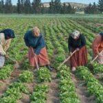 """اتّفاقية لتيسير انخراط العاملة الريفية في الـ""""CNSS"""""""