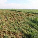 استرجاع 73 هكتارا من الأراضي الدولية بكل من منوبة وصفاقس