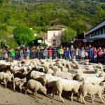 يحدث بفرنسا: تسجيل 15 خروفا بمدرسة تجنّبا لغلق أحد أقسامها