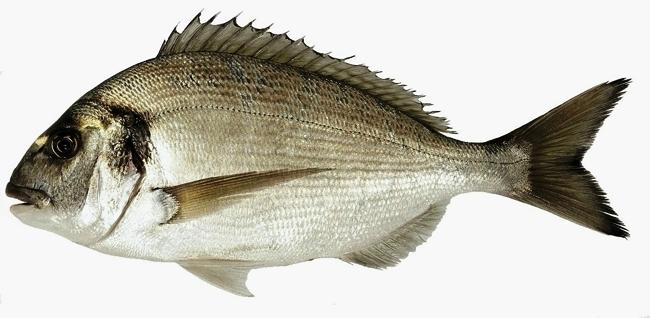 """بلاغ من وزارة الفلاحة حول سمكة """"الوراطة"""""""