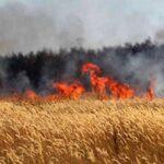 غدا : موجة الحرائق محور لقاء بين وزيري الداخلية والفلاحة