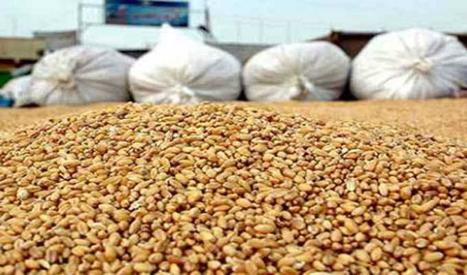 القيروان: احتجاز مدير مركز لتجميع الحبوب بسبب الغشّ