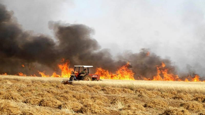 جندوبة: لجان خاصة لحماية صابة الحبوب من الحرائق