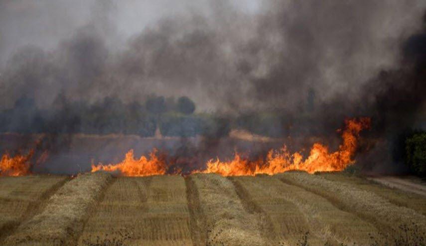 على شاكلة تونس: حرائق تجتاح مزارع بسوريا .. واتهام داعش بالوقوف ورائها